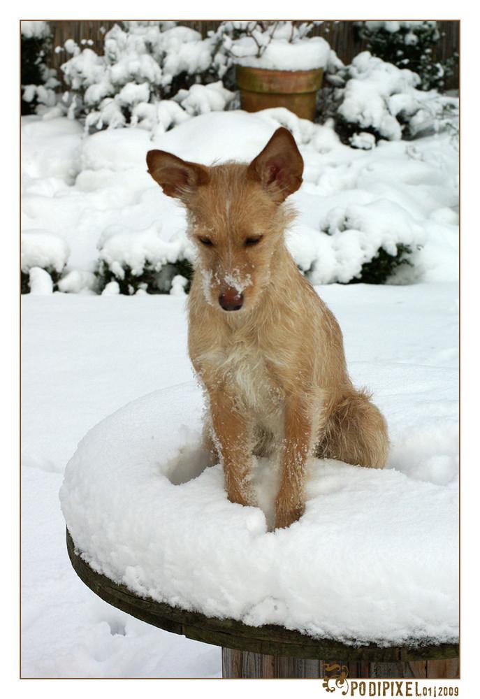 Ich bin so klein mein Herz ist rein, so weiß wie Schnee .....