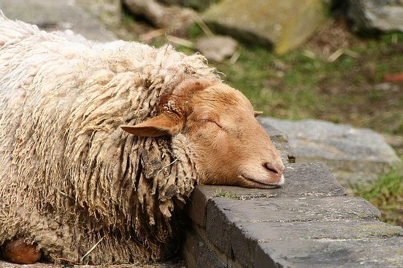 Ich bin soooo müde...:-)
