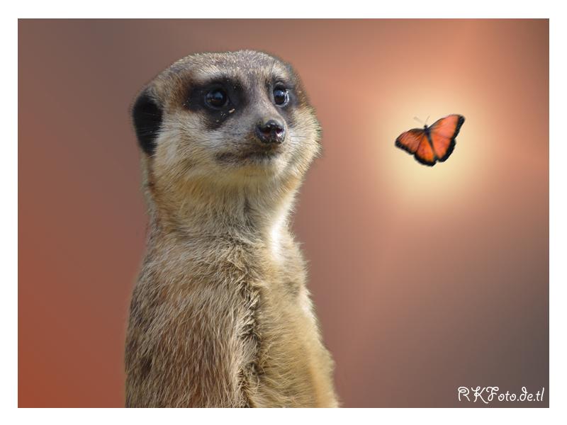 ich bins nur das erdm nnchen foto bild tiere wildlife fotomontage bilder auf fotocommunity. Black Bedroom Furniture Sets. Home Design Ideas