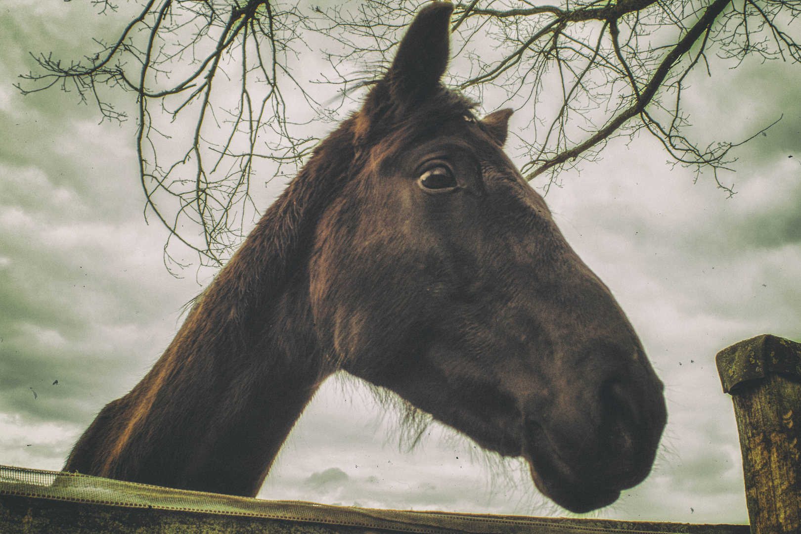 Ich fand das Pferd so geil