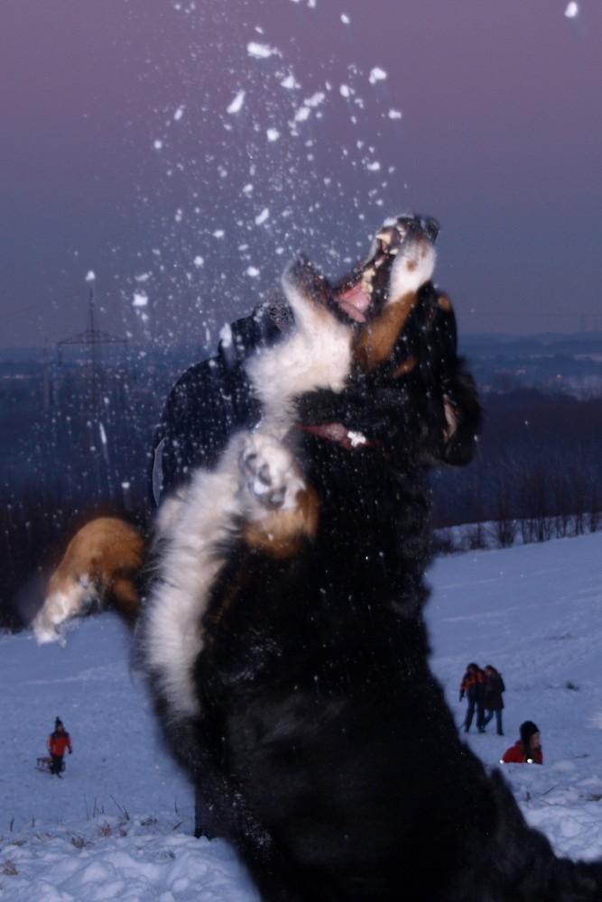 Ich fang den Schnee