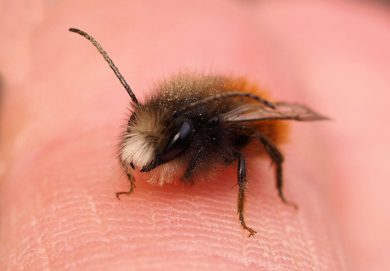 Ich freu mich schon auf meine Bienen....