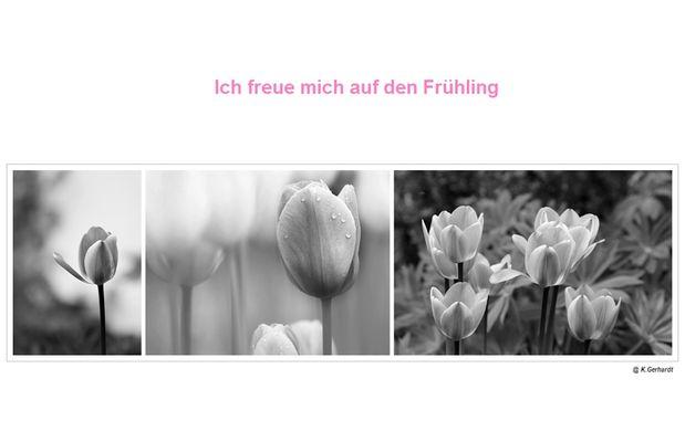 Ich freue mich auf den Frühling....