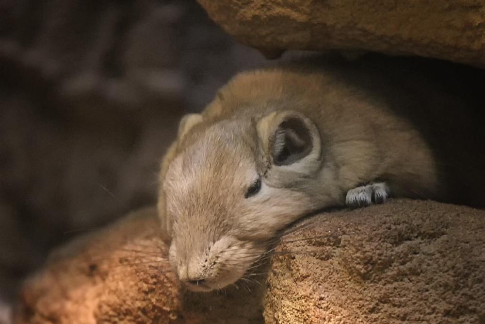 Ich fühl mich heute so schlapp