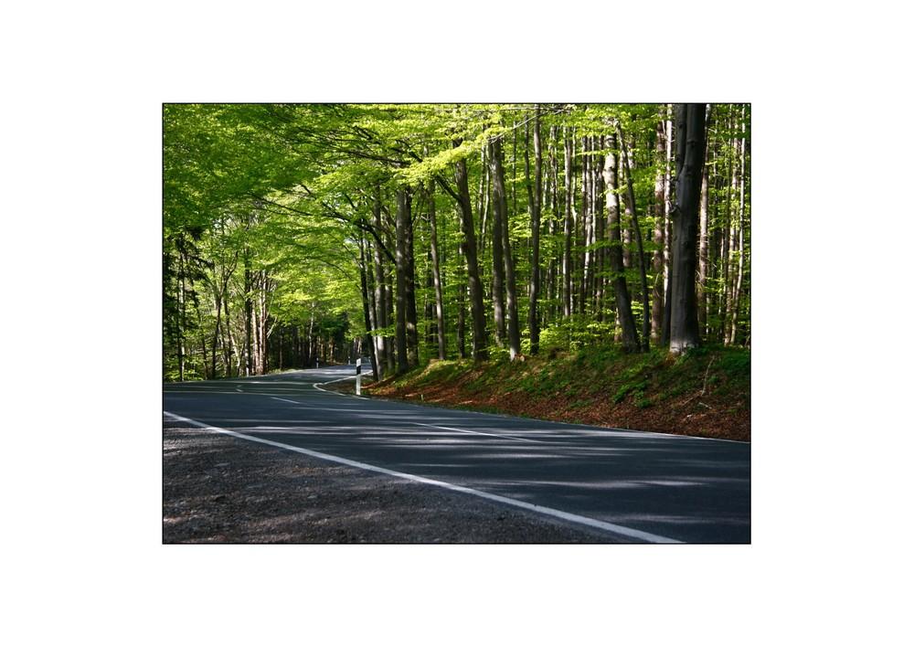 ich fuhr durch einen grasgrünen Wald.....