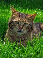 """""""Ich gab einer Katze einen Befehl, und die Katze gab ihn ihrem Schwanz weiter."""""""