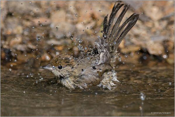 Ich geh baden