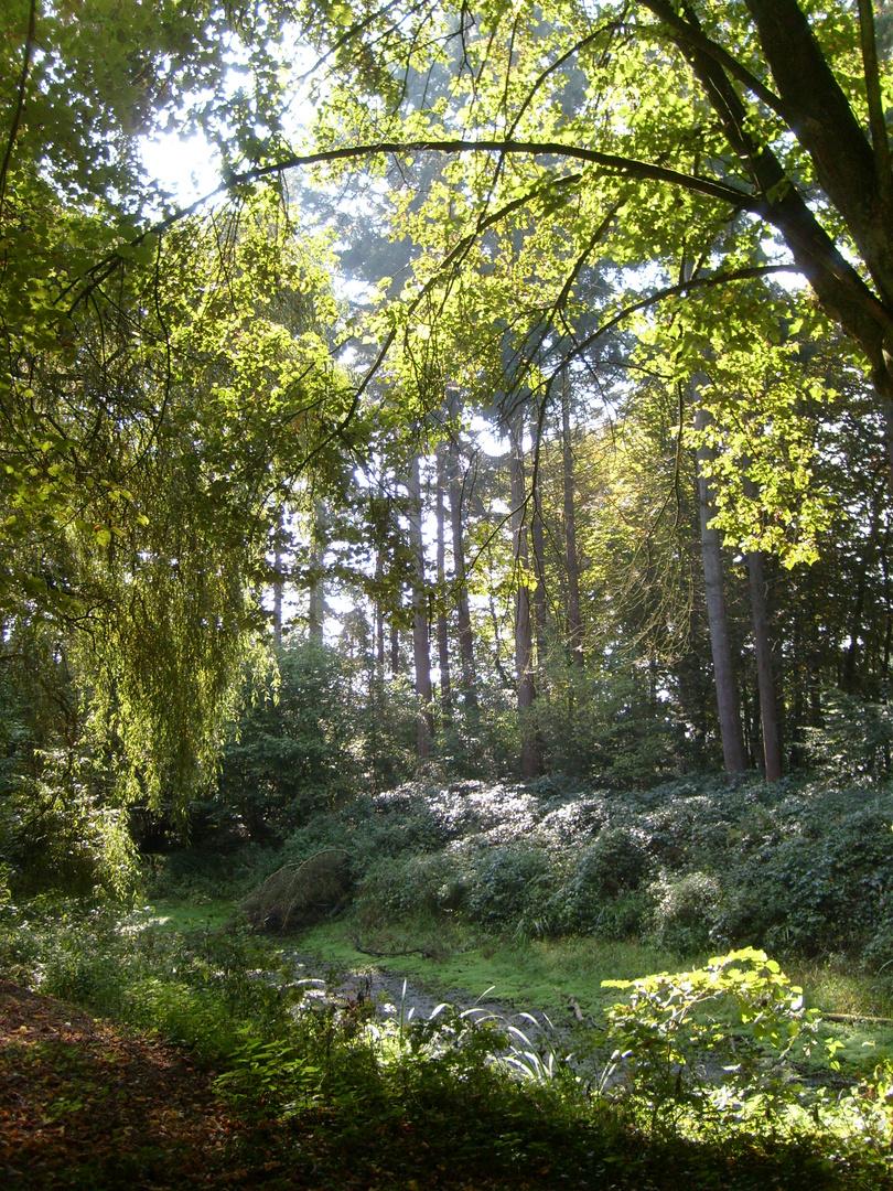 Ich ging im Walde so vor mich hin