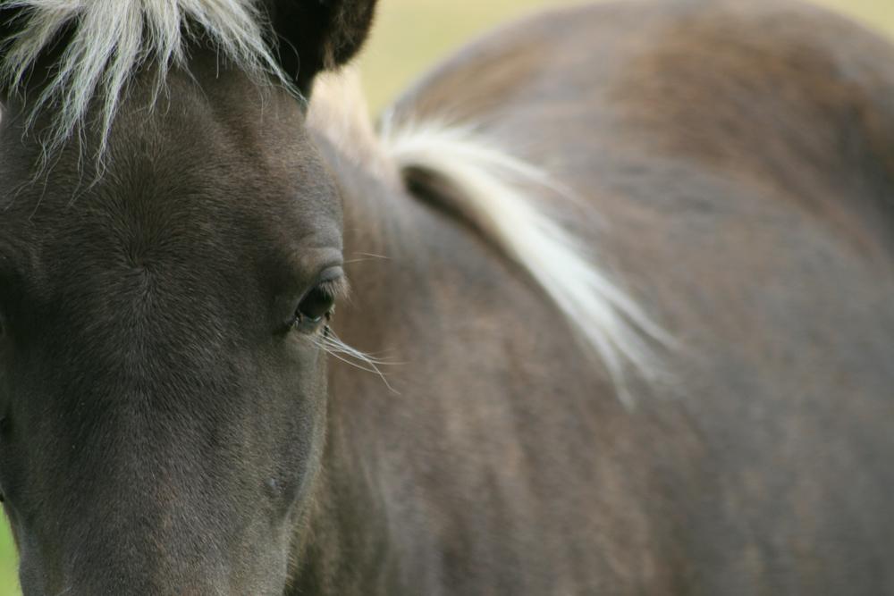 ich glaub das war ein pony!?