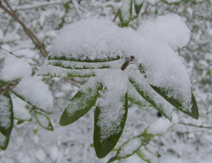 Ich glaub es hat geschneit