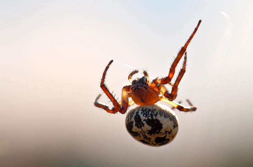 Ich glaub, ich Spinne.
