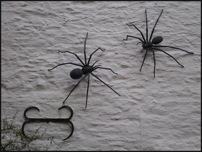 Ich glaub, ich Spinne!
