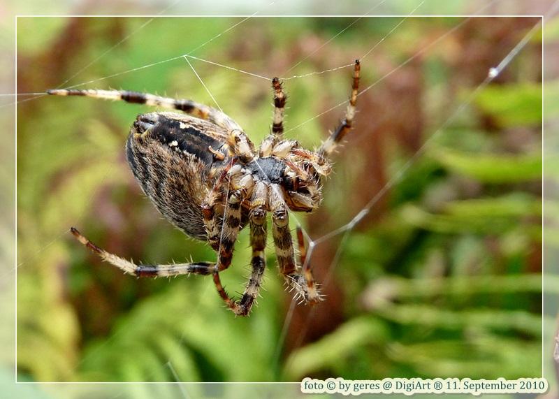 Ich glaub, ich Spinne