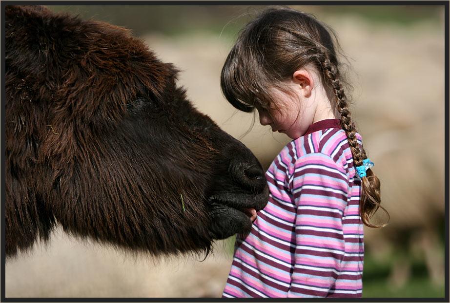 ich glaub mich knutscht ein Esel