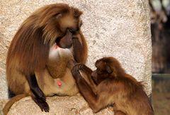 Ich glaub mich laust der Affe