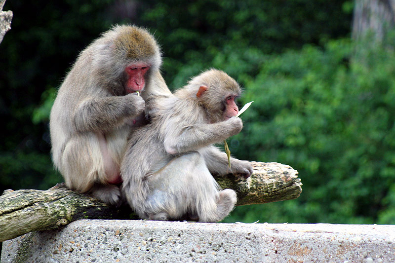 Ich glaub mich laust der Affe !!!!