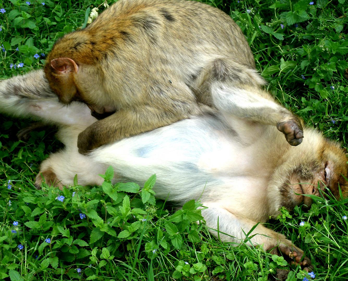 Ich glaub mich laust der Affe! :-)