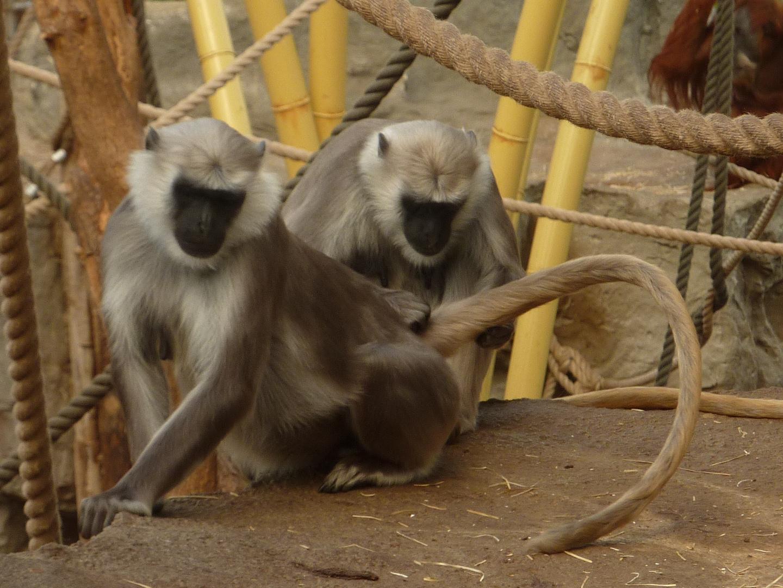 Ich glaub mich laust der Affe. Zu Besuch in der ZOOM Erlebniswelt Gelsenkirchen