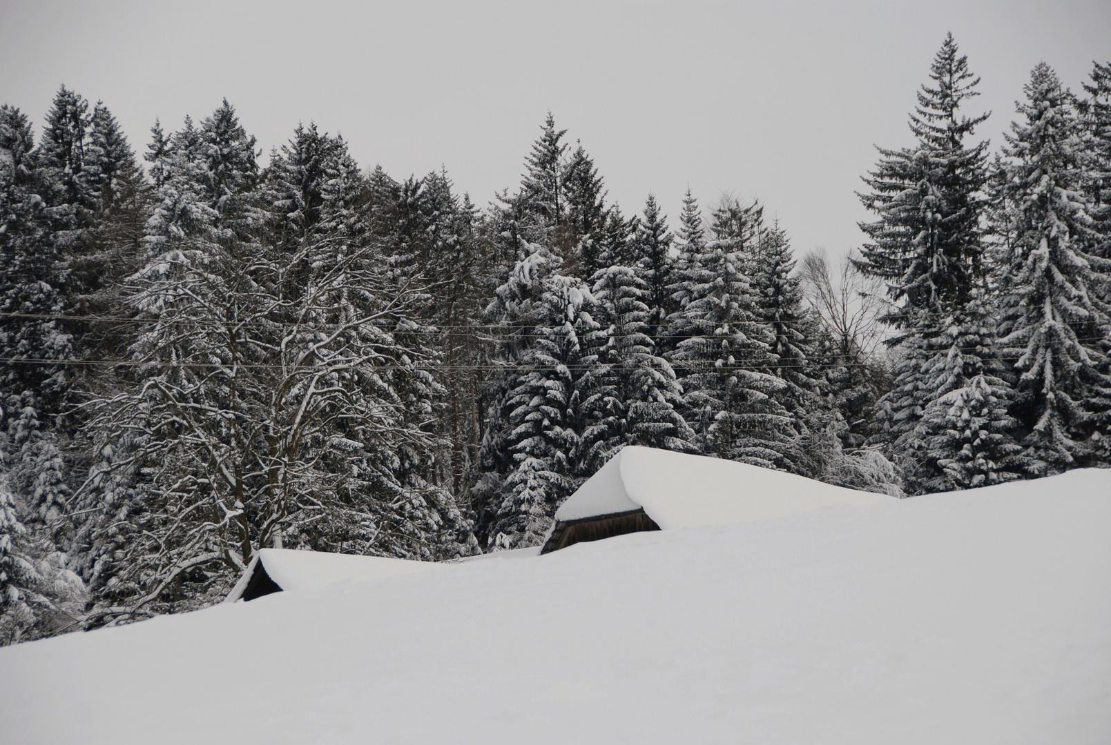 Ich glaube jetzt ist Winter