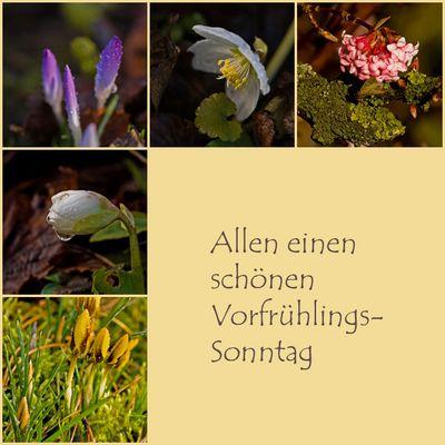Ich hab den Frühling gesehen...