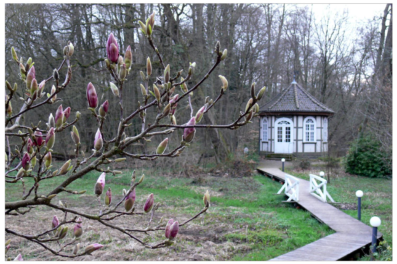 Ich hab den Frühling gesehn...