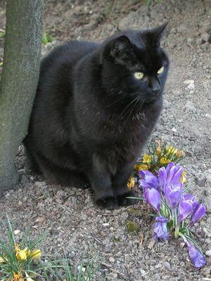 Ich hab die Blumen nicht berührt