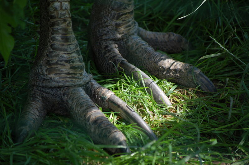 Ich hab die Füße schön