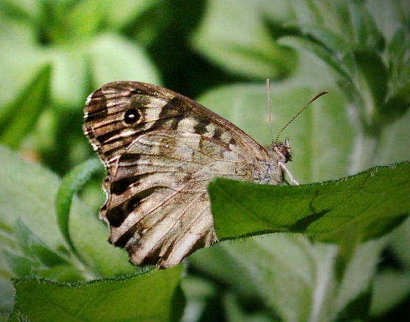 Ich hab keine Ahnung von Schmetterlingen