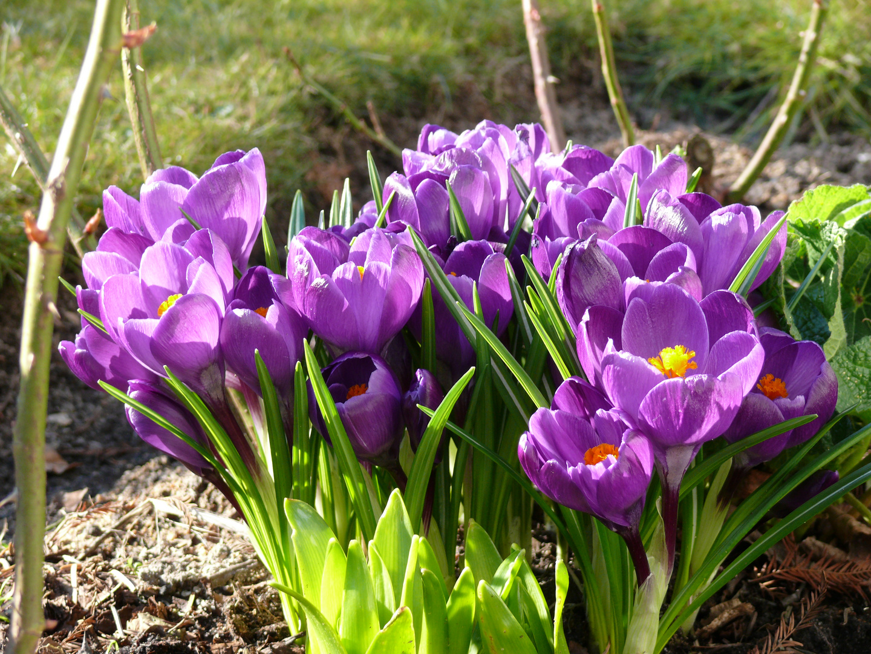 Ich habe den Frühling...
