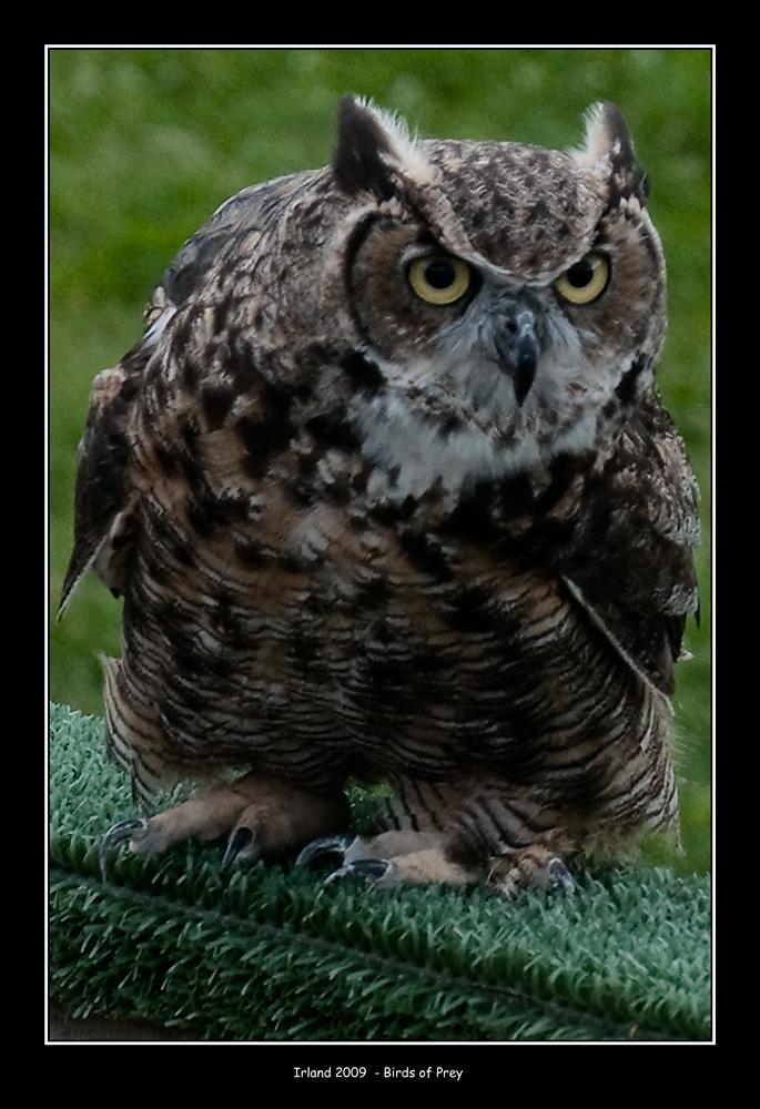 Ich habe dich im Auge !!