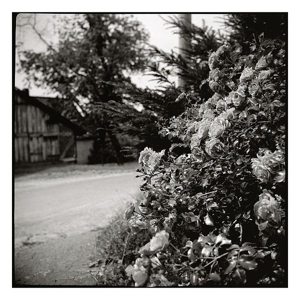 Ich habe Dir nie einen Rosengarten versprochen