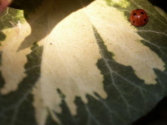 Ich habe einen Marienkäfer versteckt. Findet ihr ihn?
