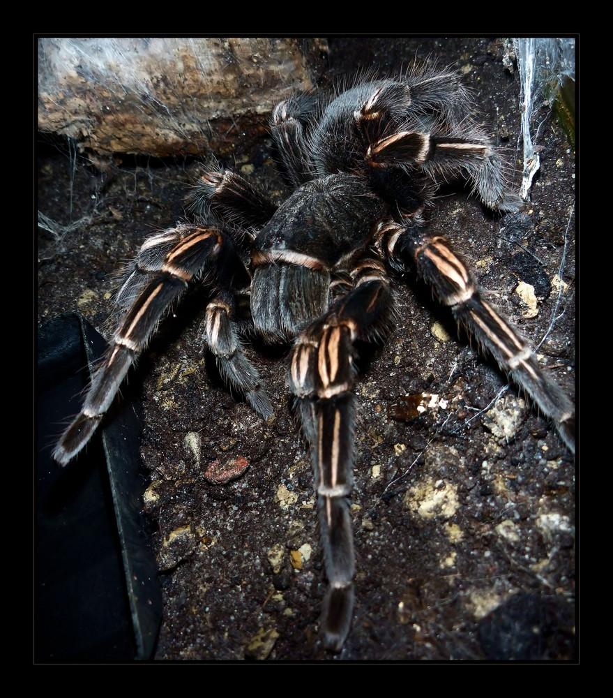Ich habe mal die Spinne meiner Eltern geärgert...