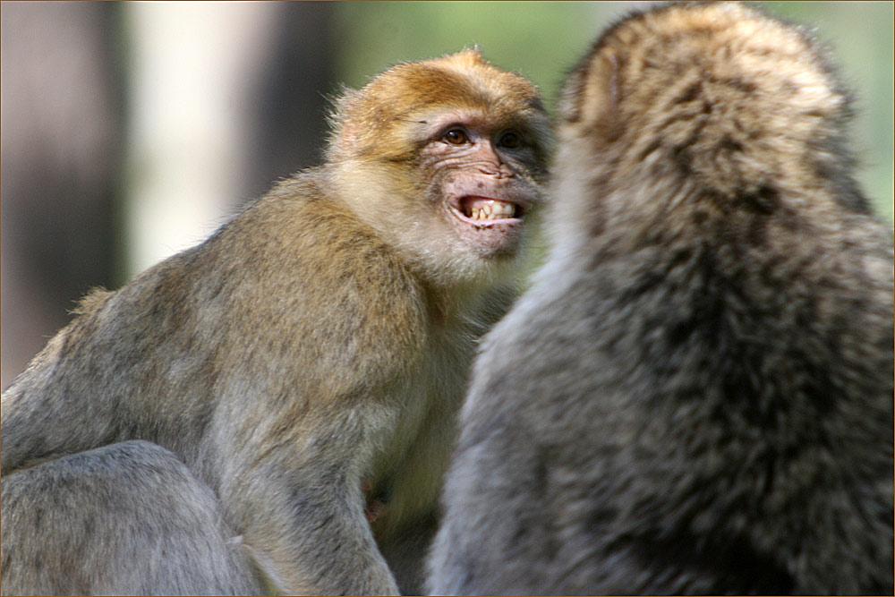 Ich habe schöner Zähne, als Du!!!!!