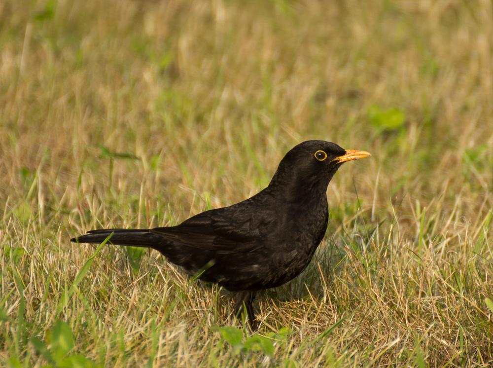 Ich hab´noch `nen Vogel ;-)
