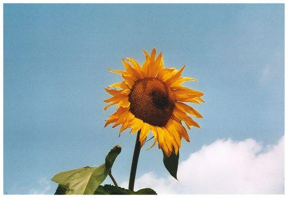 Ich hätte gerne etwas Sonne