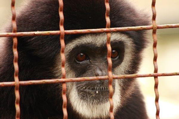 Ich hasse Tierparks und Zoo´s