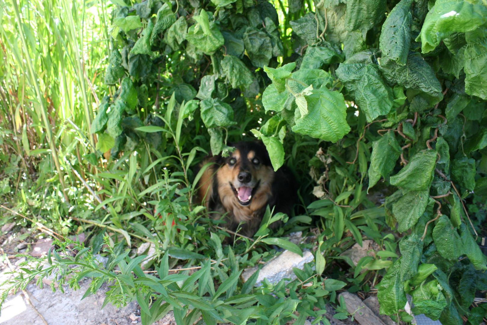 Ich heiße Ares und wollte mich verstecken