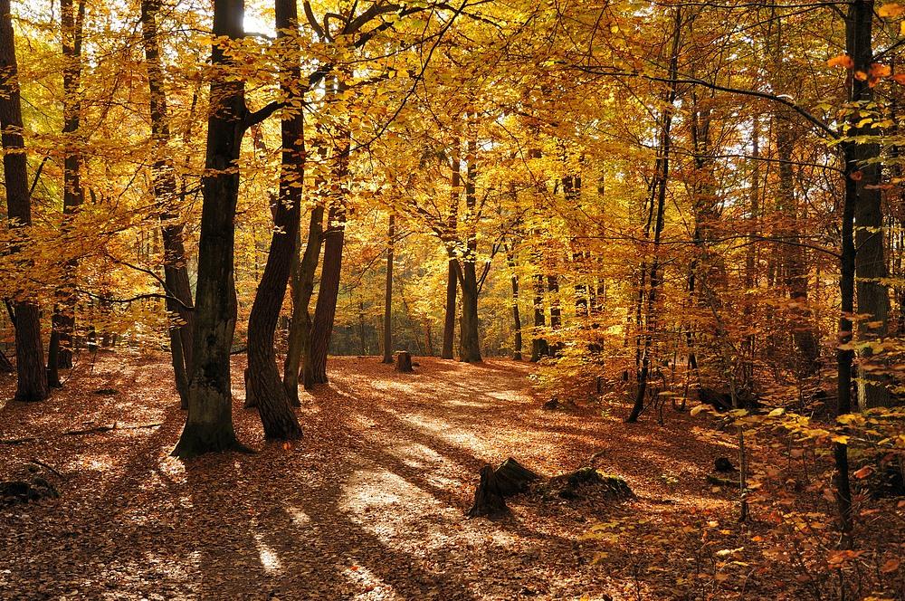 Ich hoffe der Herbst zeigt sich nochmal von seiner schönsten Seite.