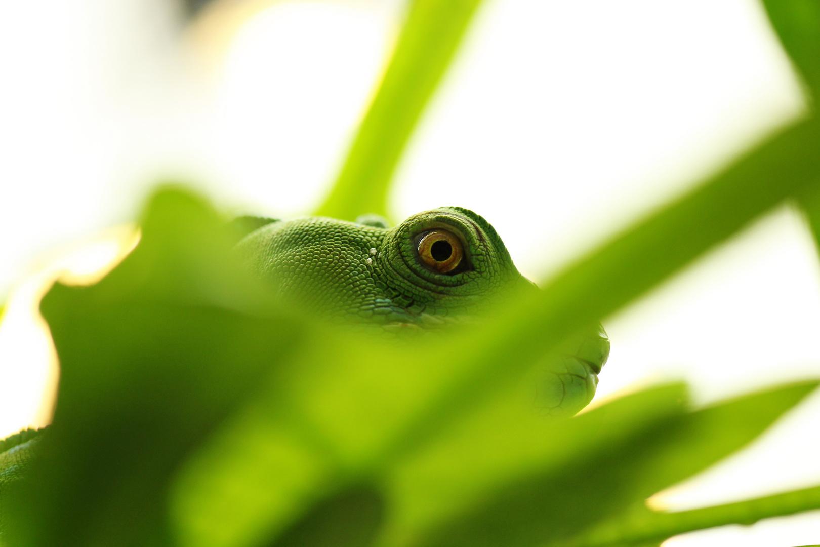 Ich kann dich sehen!