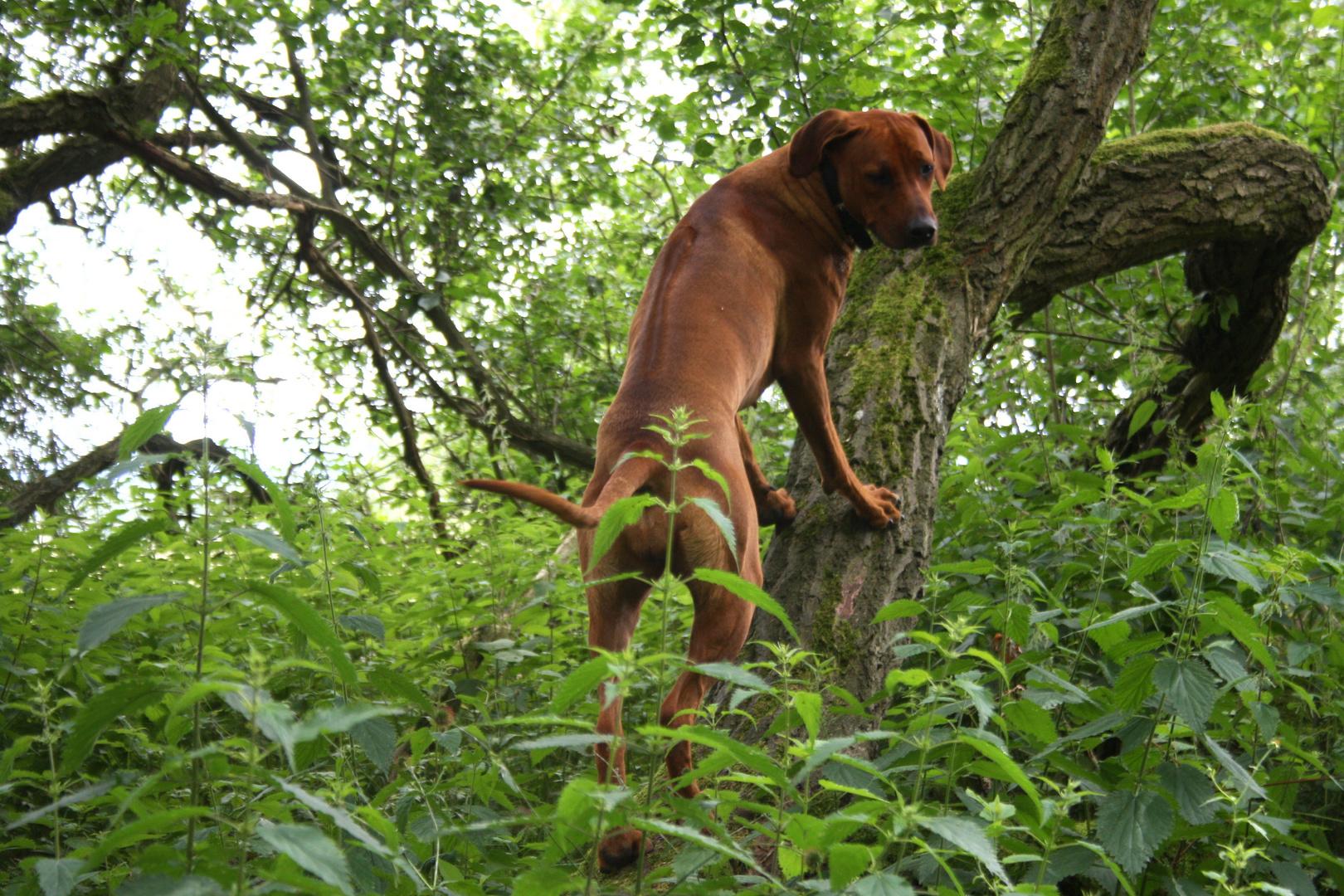 Ich kann klettern