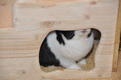 """""""Ich kann mir das nicht erklären, aber hier oben riecht es verdächtig nach Kaninchenfurz!"""""""