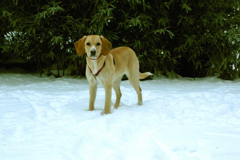 Ich kanns nicht fassen , überall Schnee ( Emma )