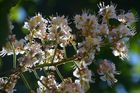 Ich liebe Blüten :)