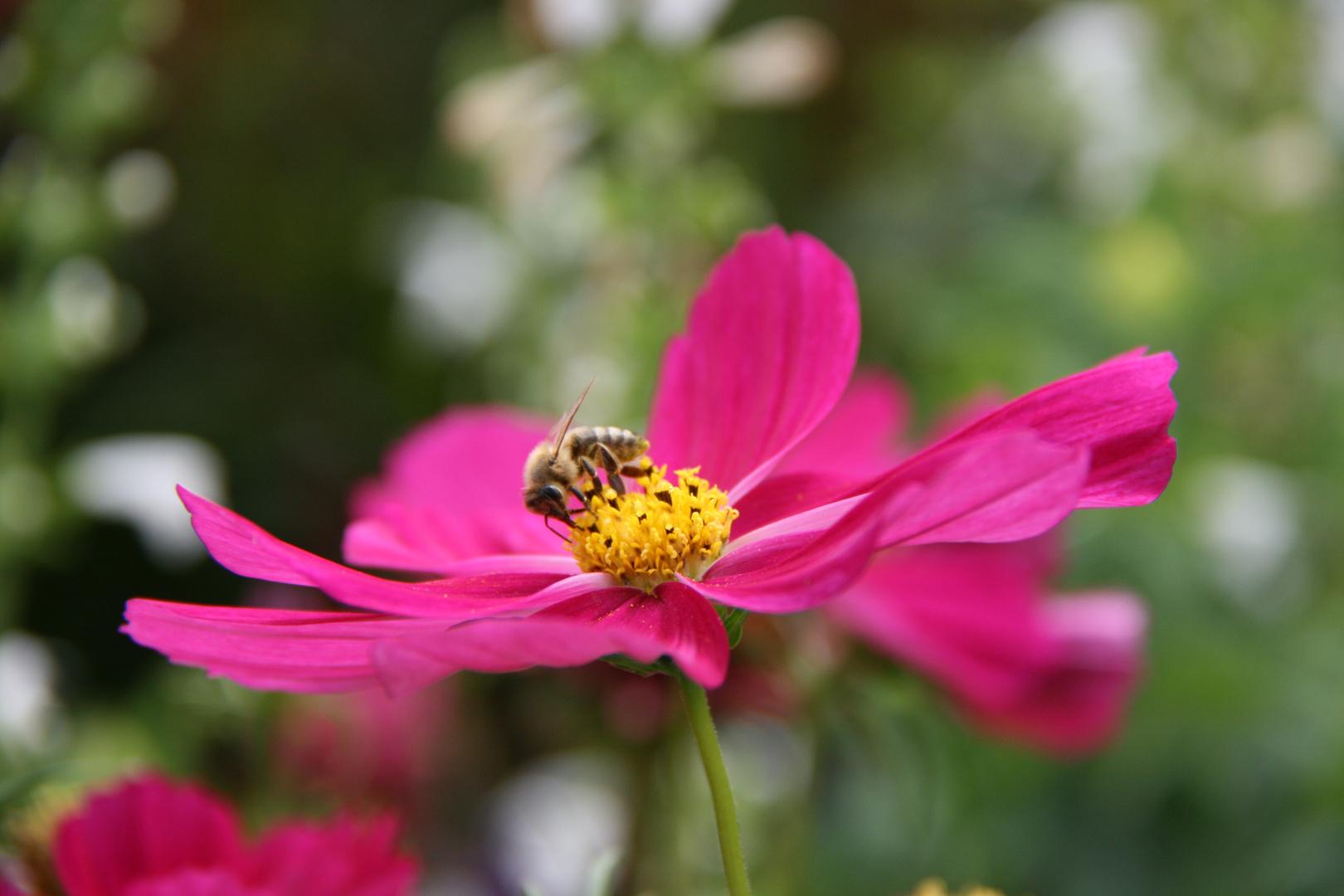 ich liebe Blumen :o)