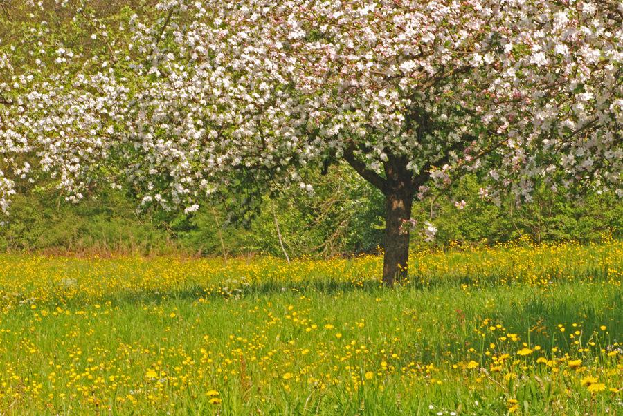 Ich liebe den Frühling