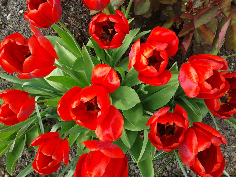 ... ich liebe den Frühling einfach :-)