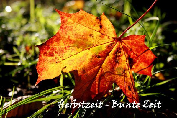 Ich liebe den Herbst....