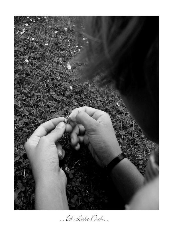 [ich liebe dich . . . ich liebe dich nicht . . . ]