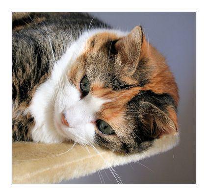 Ich liebe dieses Katzentier ....
